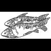 Alimentos en la Biblia: Pescado