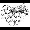 Alimentos en la Biblia: Miel