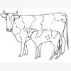 Bible Animals: Cattle