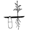 [EE] An Easy Way to Water Seeds