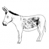 Animales en la Biblia - El burro