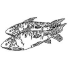 Criação de Peixe