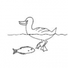 How to Care for Fish and Ducks