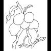 Como Preservar Mangas e Outras Frutas