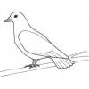 Bible Animals - The Dove