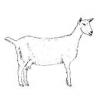 Raising Goats