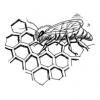 Bible Foods - Honey