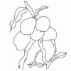 Preserving Mangoes & Other Fruit