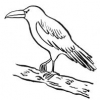 Bible Animals - The Raven
